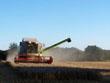 Weizenernte auf Groten Barg